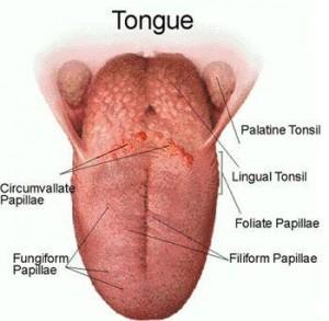 obat penyakit kanker lidah